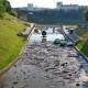 Устье Витьбы после дождя превратилось в свалку