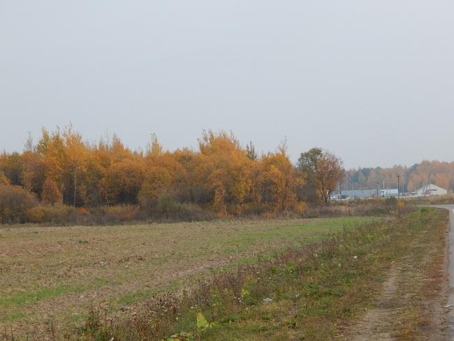 За этим лесом начинались взлетные полосы.
