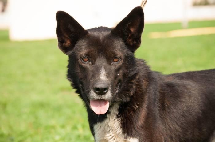 Аркаша, пес почтенного вида и возраста. Фото из архива приюта