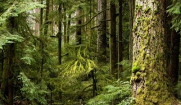лес-природа-экология