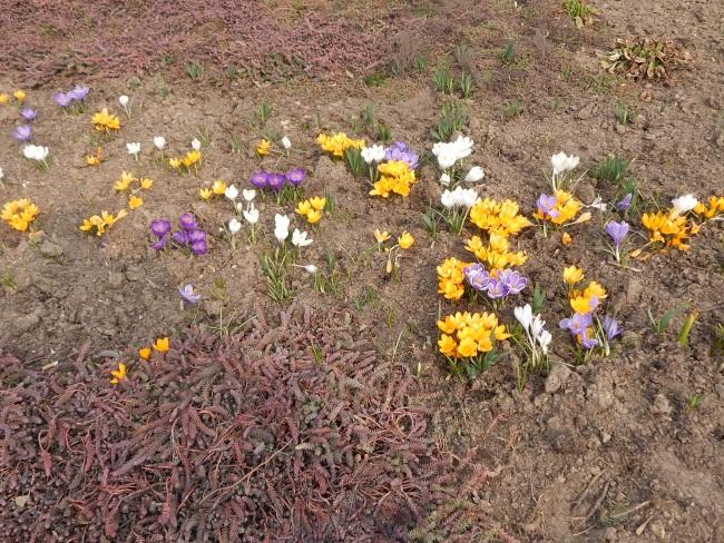 Цветы - символ весны.
