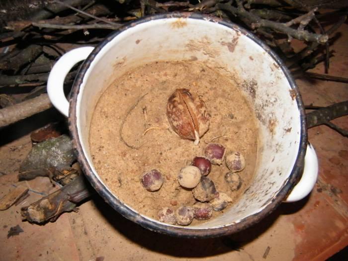 Фото  семян ореха грецкого