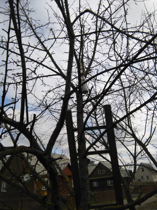 Фото синичника  в саду   (1)