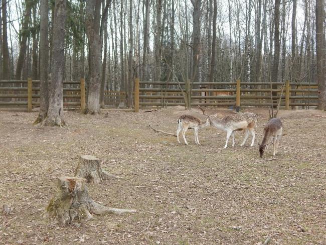 Благородные олени всегда вежливы с посетителями.