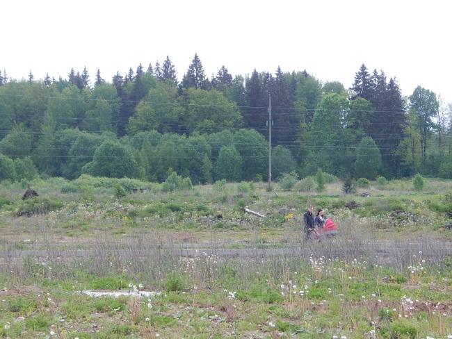 На Еременко живут молодые семьи. Тут же у леса они гуляют с детьми.