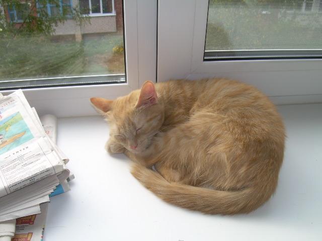 Не всякий витебский кот стремится на волю