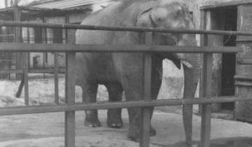 Вот он, единственный слон Беларуси. Фото http://s13.ru/