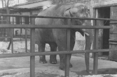 Почему в витебском зоопарке нет слона?