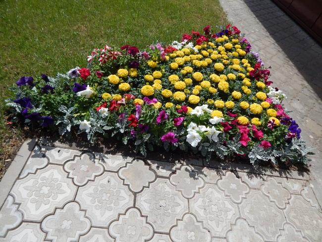 Городские цветы.