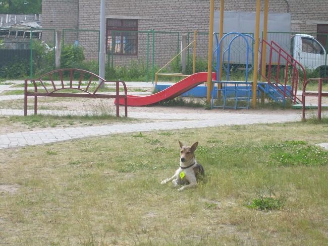 Собаки на Герцена гуляют сами по себе.