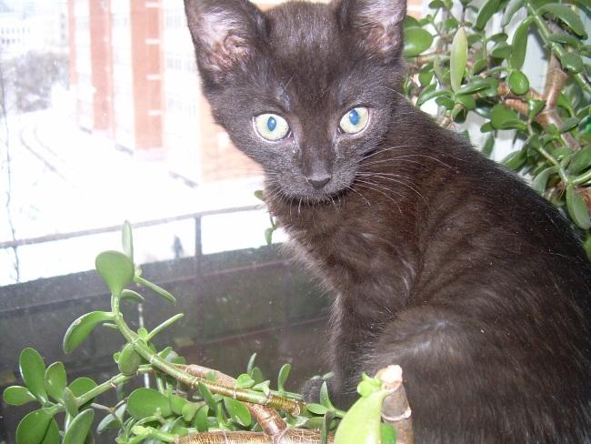 Черный кот на денежном дереве - это к  финансовой удаче.