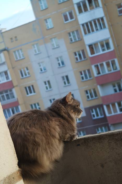 Витебский кот также достоин своего Дня, как и его питерский собрат!