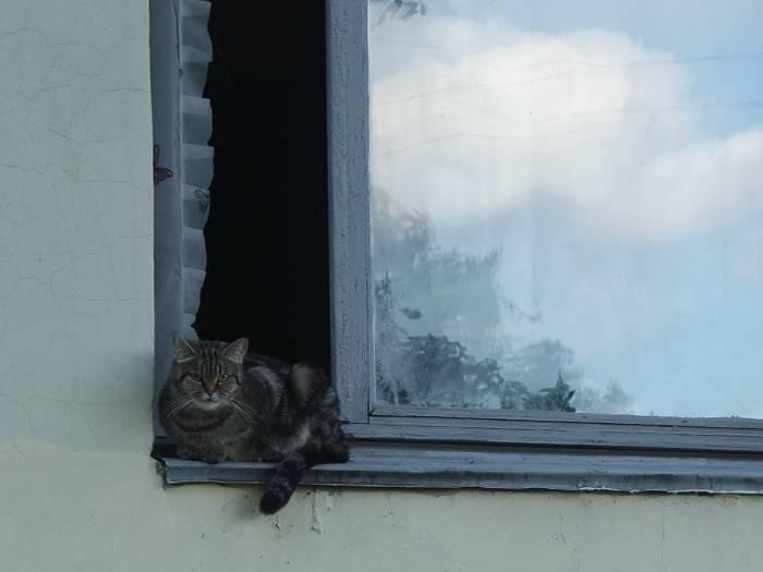Котов много, что и не скажи