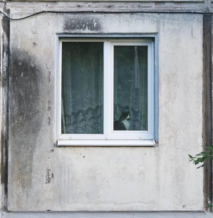Витебский кот встречается и в неволе