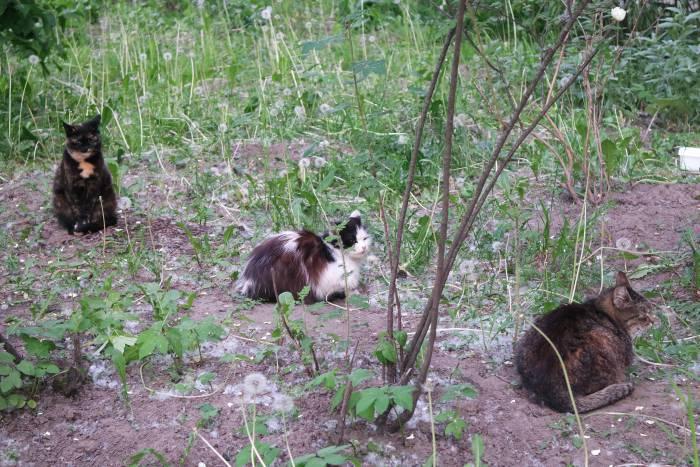Теплое витебское солнышко пригревает и котов