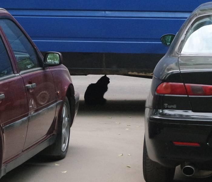 Где только не заметишь кота!