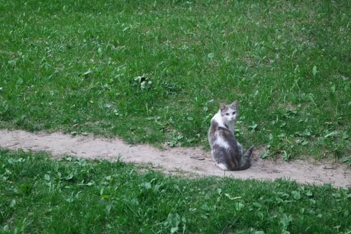 Беззаботный витебский кот