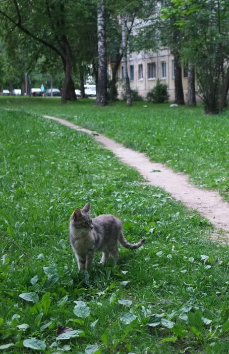 Витебский кот: задумчив и загадочен