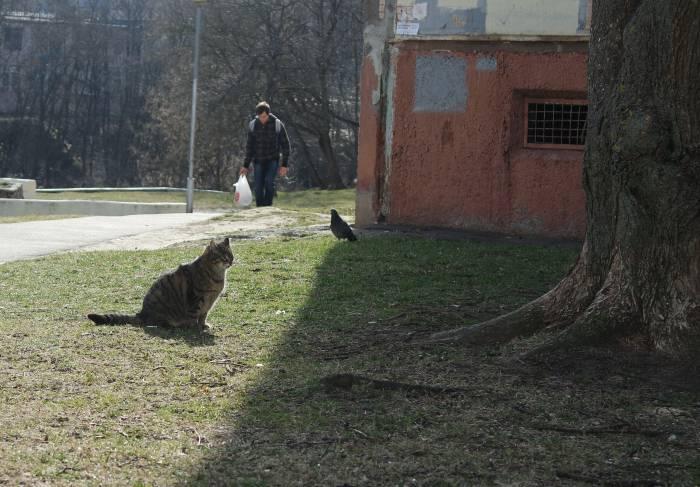 Просто толстый кот, который радуется теплому лету