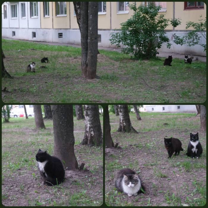 Летом витебские коты собираются в прайды