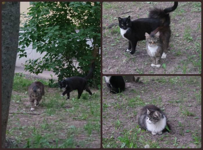Умилительные мордочки витебских котов