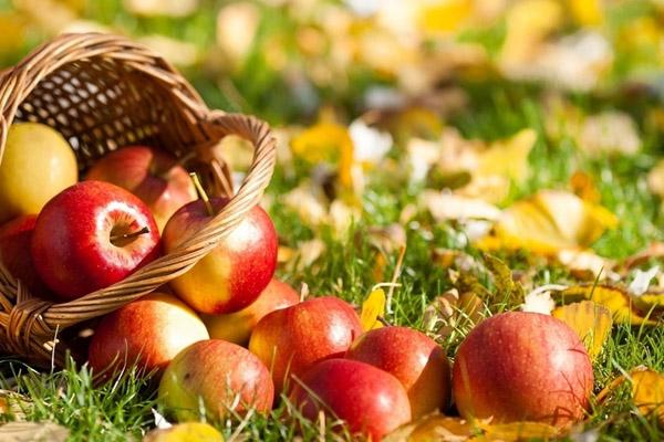 Яблочный Спас в Витебске   Витебский Курьер