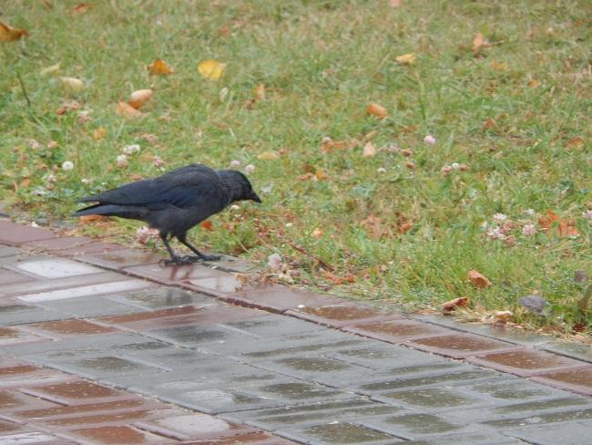 Дожди дождями, а обед по расписанию!