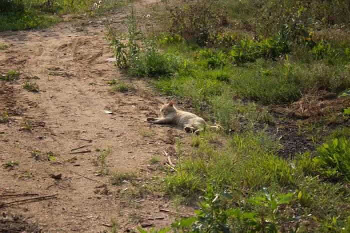 Возле усадьбы нас встречало местное зверье