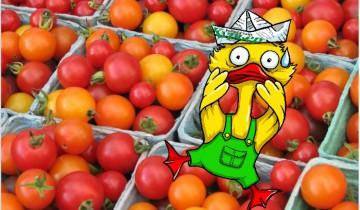 fura s pomidorami - oblozhka