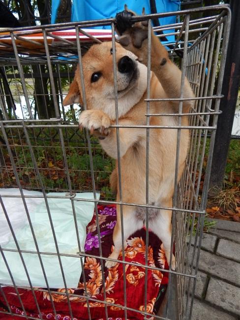 Выпустите меня! Пожалуйста!