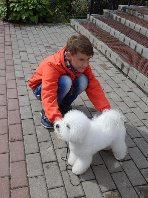 Настоящая Белоснежка: собачка Дейзи породы бишон фризе.