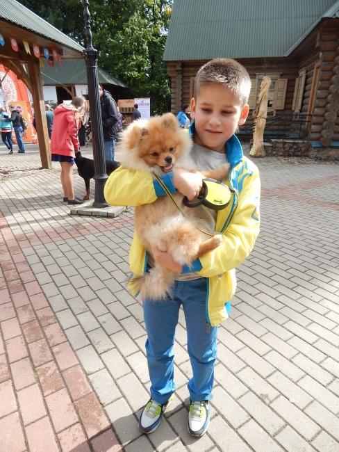 Шпиц Эмиль - настоящее чудо в мире собак!