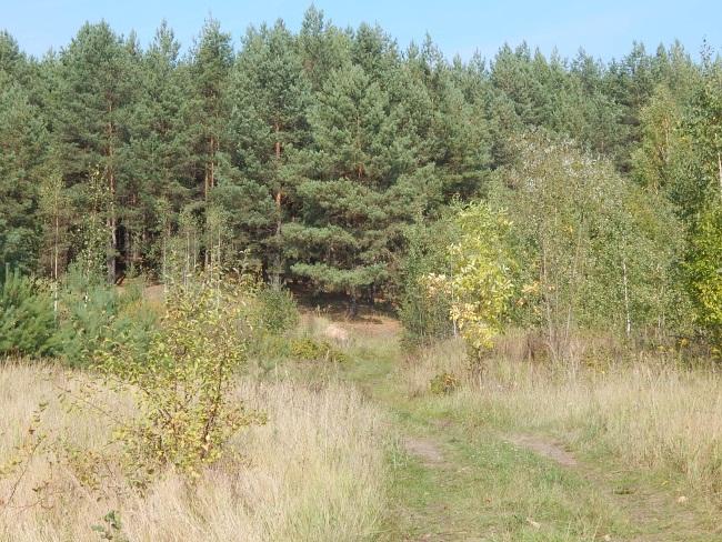 Лес - легкие Земли.