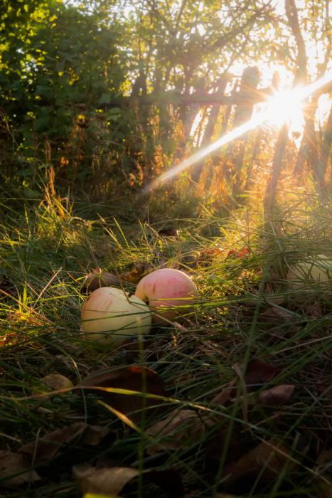Августовский вечер, без сомнения, пахнет яблоками