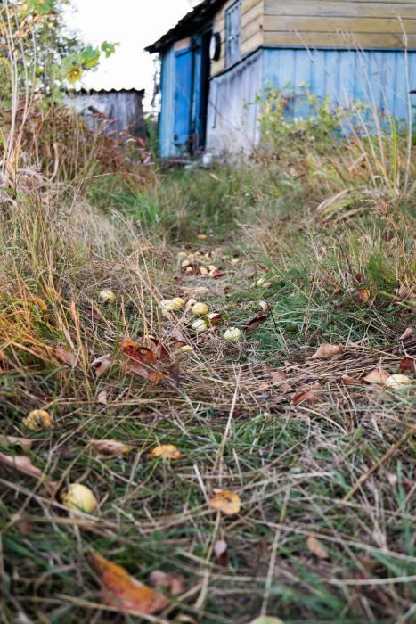 Осень прокладывает свою тропинку в каждый сад
