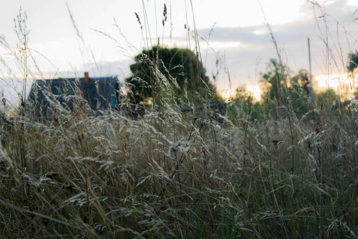 С наступлением осени травы становятся седыми и ломкими
