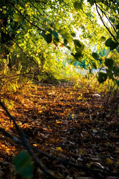 Последнее летнее солнце собирает желтые листья