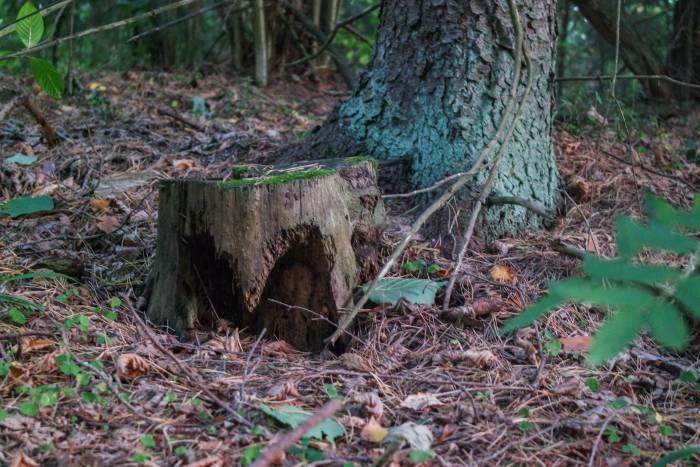 На пороге осени лес таит не рассказанные истории и нераскрытые тайны