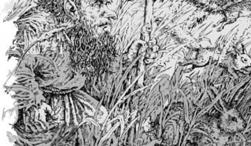 Леший иллюстрация из книги Яна Барщевского