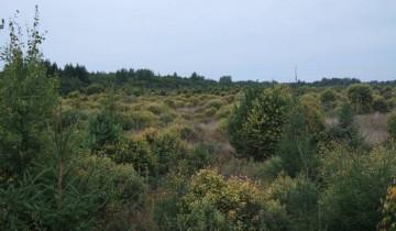 Уникальное болото Ельня