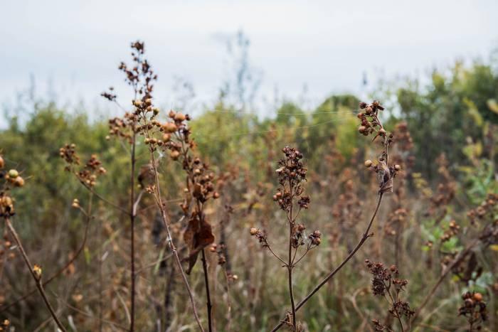 Природный комплекс Ельни богат на флору и фауну