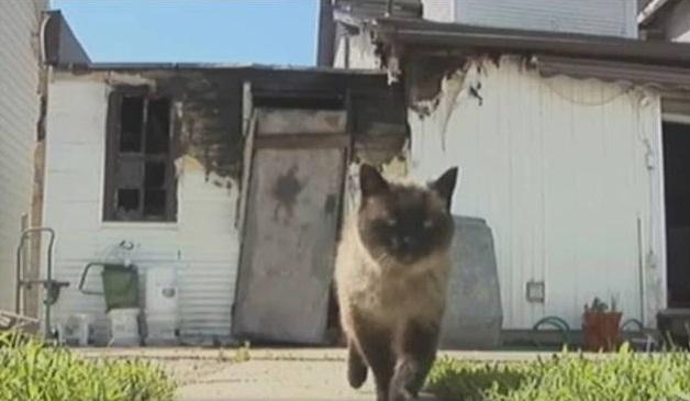 Американский кот Эштон, в прошлом году спасший своих хозяев от пожара