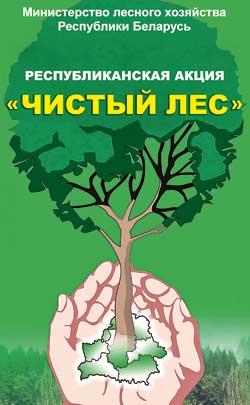 Чистота в наших лесах - в наших руках. Фото: mlh.by