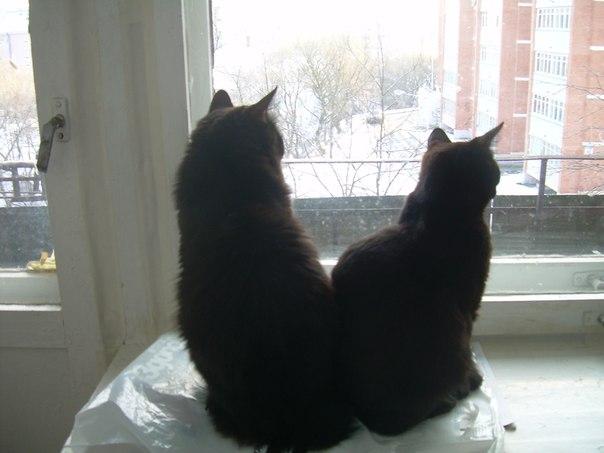Черный кот любовь привлечет