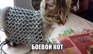 Боевой кот