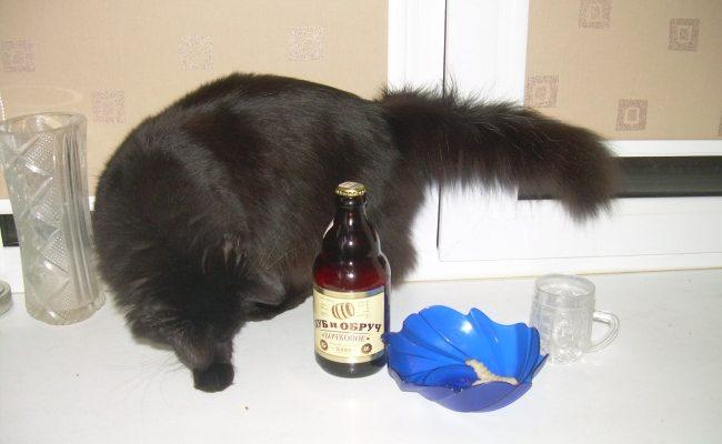 пиво и кот