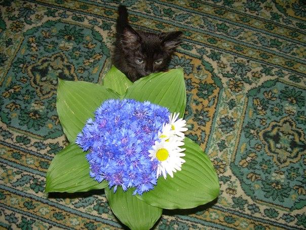 Котята - цветы жизни