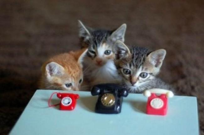 Позвони мне, позвони. Источник: negani.com