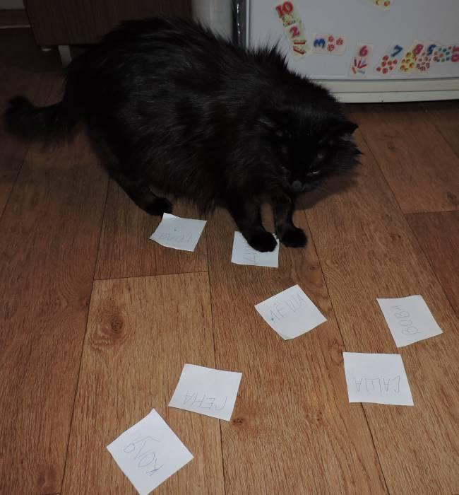 Кот предсказывает будущее. Фото Саши Май