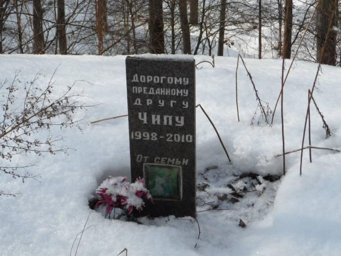 Надгробие собаки Чипа